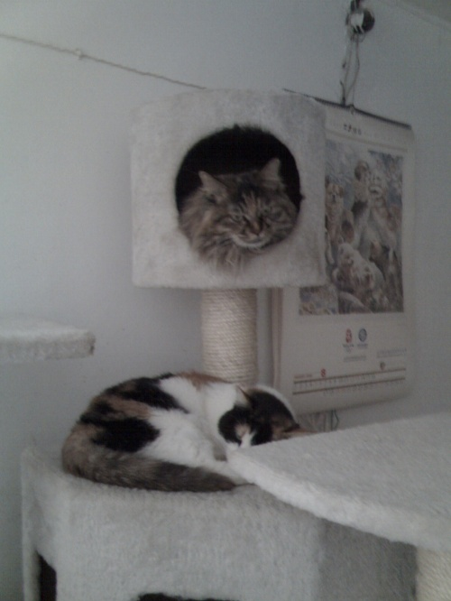 家可爱的猫猫们