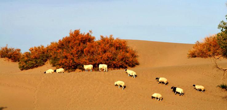 吐鲁番市  标签: 旅游景点 风景区  红柳沙漠观赏区共多少人浏览