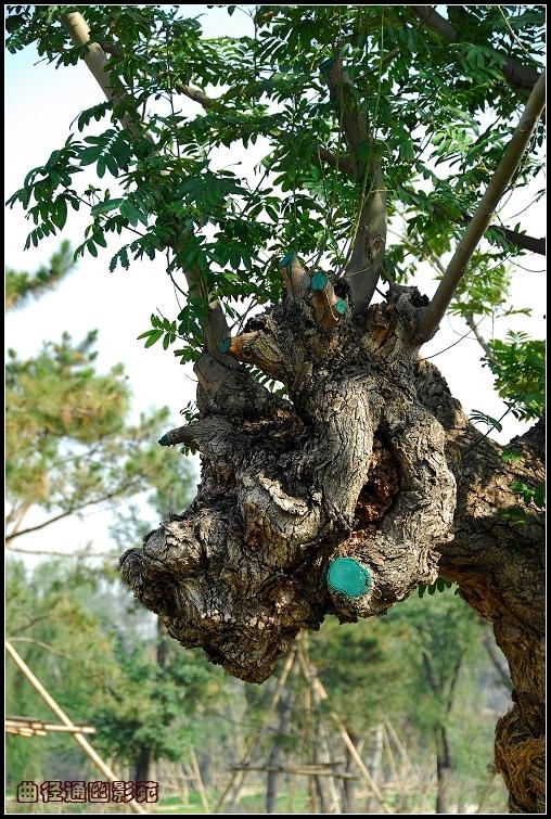 榕树生长在什么地方