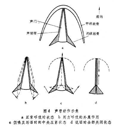 鼻腔结构图解剖图高清