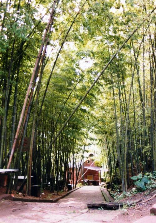 自贡尖山湖风景区的竹