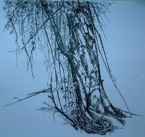 钢笔速写3---藤与树