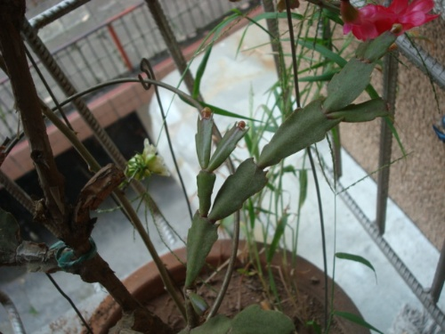 盆景 盆栽 植物