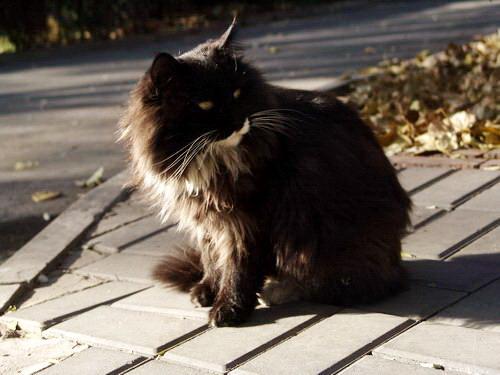 猫猫(可爱的动物50)