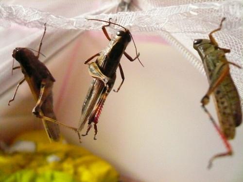环保小制作昆虫