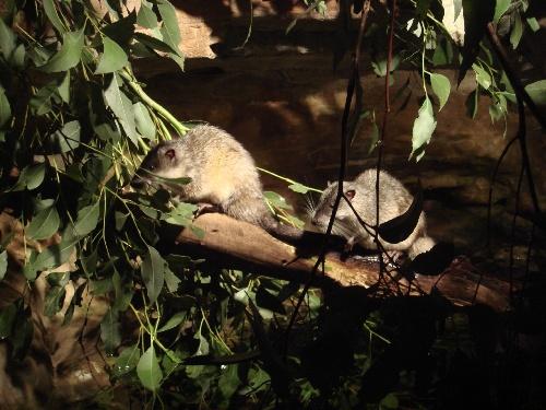 aronga Zoo