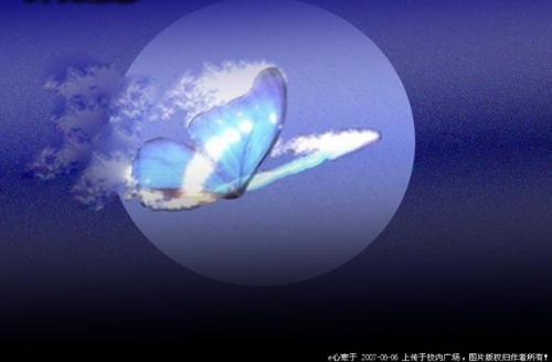 夕阳海蝴蝶-醉卧西楼-搜狐博客