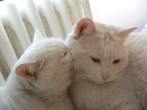 先看二宝的可爱照片-小猫蜷缩在暖窝-搜狐博客