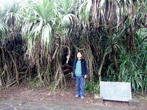 大片的野菠萝林生长十分茂盛,林中巨大的树根盘根错节,纠缠在一起很难