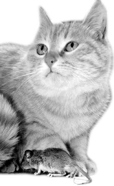 读书小猫简笔画