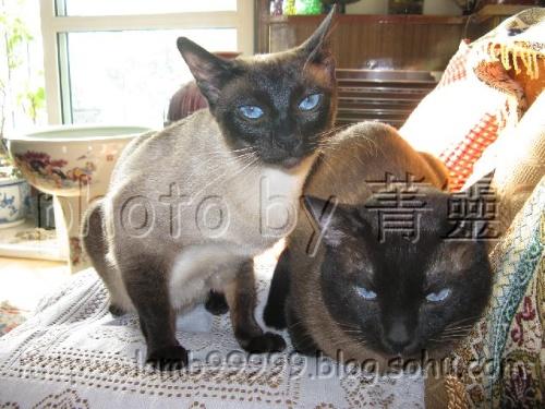 猫咪嘴馋可爱图片