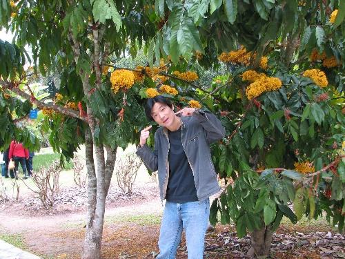 美丽的西双版纳--勐仑植物园