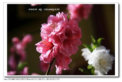 寻找云南的春天----那些花儿