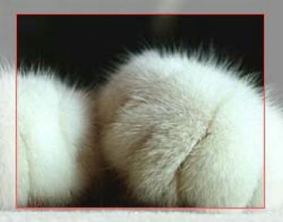 可爱猫爪 (贴图)