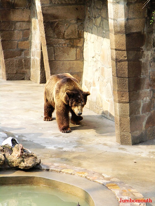 上海动物园之熊山