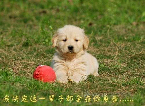 人与宠物-蝴蝶-搜狐博客